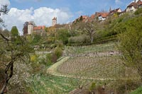 A small vineyard under the ramparts